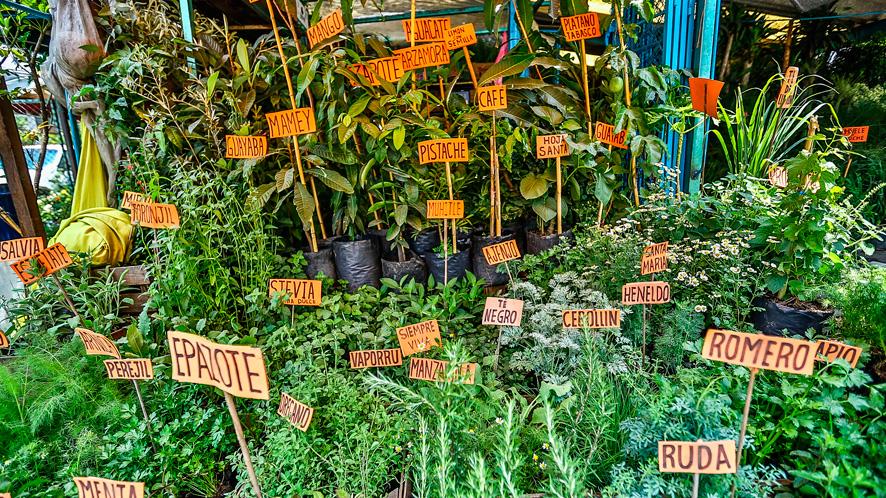 Resultado de imagen para Mercado de plantas y flores Madreselva