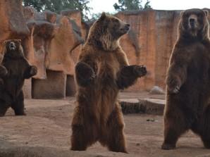 Visita el Zoológico de Morelia